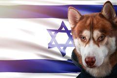 patriottische-hond-trots-voor-de-vlag-van-israël-portret-siberische-schor-sweatshirt-stralen-heldere-zon-122772217